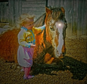 Have you hugged your fairy horse today 11 2014 (4)_1082x1050