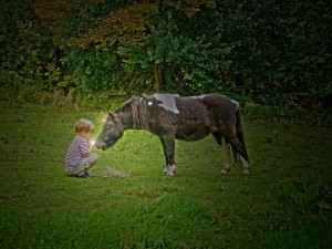 Have you hugged your fairy horse today 11 2014 (8)_1400x1050