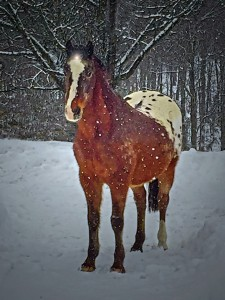 2 2 2015 Blog Snow Horses Unicorns (2)_720x960