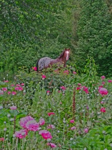 Old Horse in the Poppies