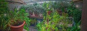 Fairy Pit Greenhouse (2)