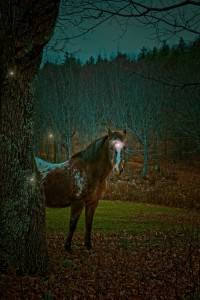 Old Horse Guardian of the Home Place Fairies